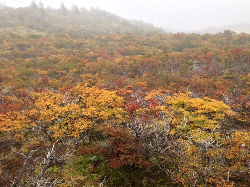 scott forest