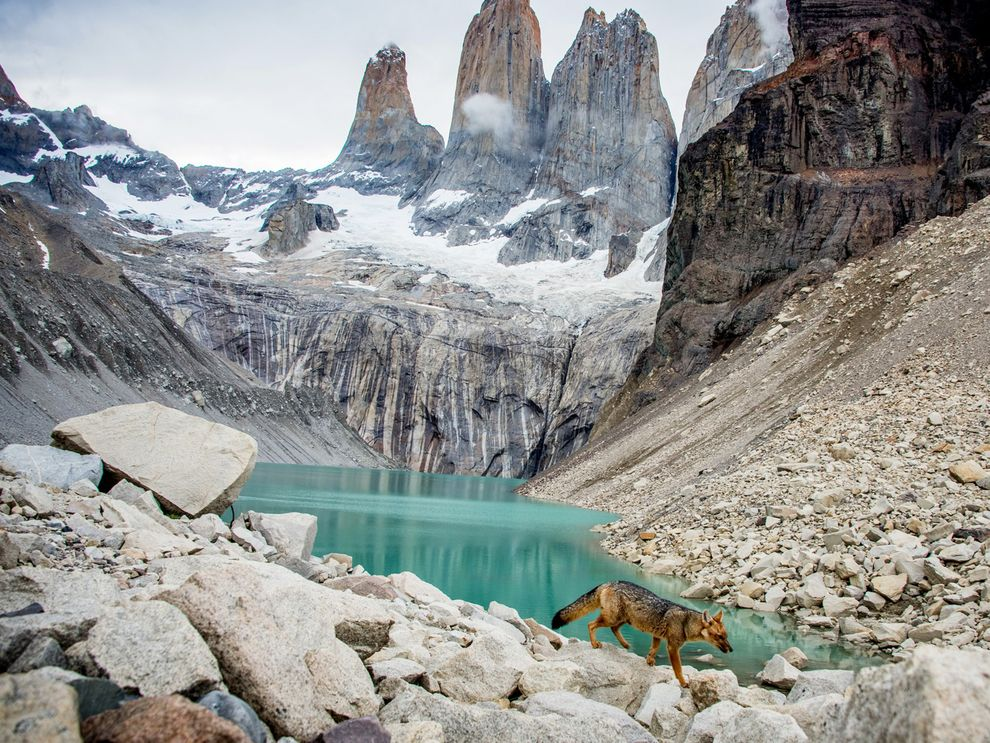 torres-paine-chile-fox_88870_990x742