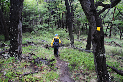 13 Carefully sticking to the newly made paths following yellow waymarkers