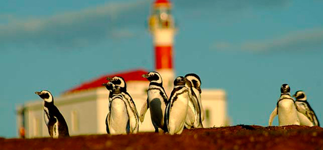 cruceros penguins