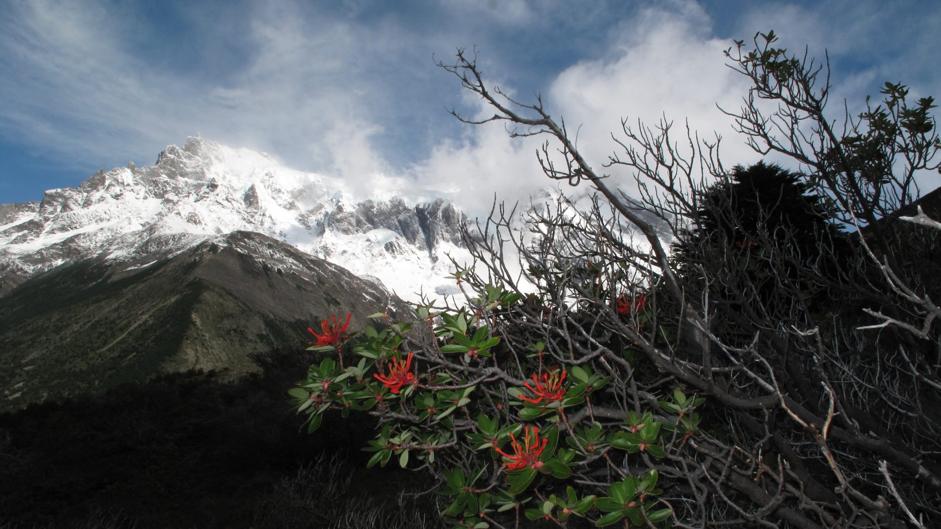 Swoop Patagonia's Blog